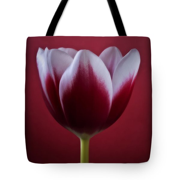 Tote Bag featuring the photograph Abstract Red White Flowers Tulips Macro  Photography Art by Artecco Fine Art Photography