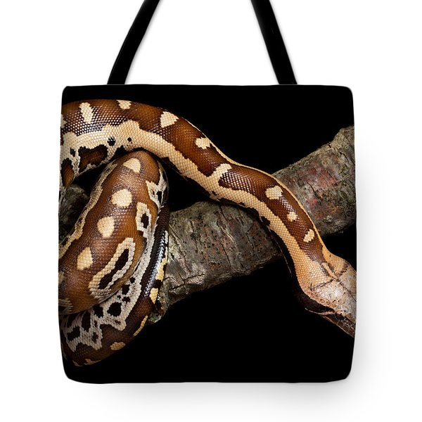 Blood Python Python Brongersmai Tote Bag