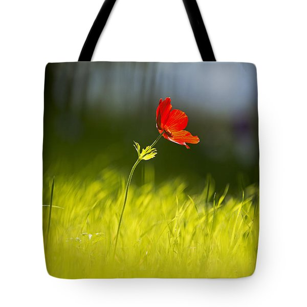 Blossomed Megiddo 1 Tote Bag by Dubi Roman