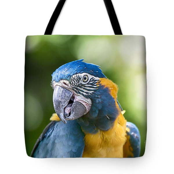 Blue And Gold Macaw V3 Tote Bag by Douglas Barnard