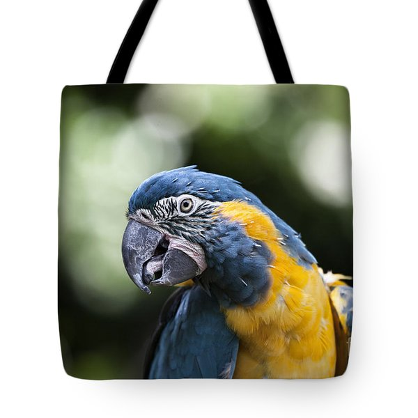 Blue And Gold Macaw V5 Tote Bag by Douglas Barnard