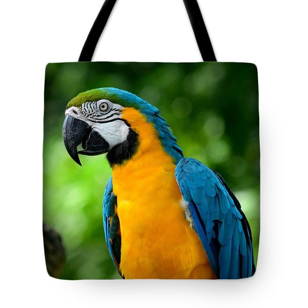 Blue And Yellow Gold Macaw Parrot Tote Bag