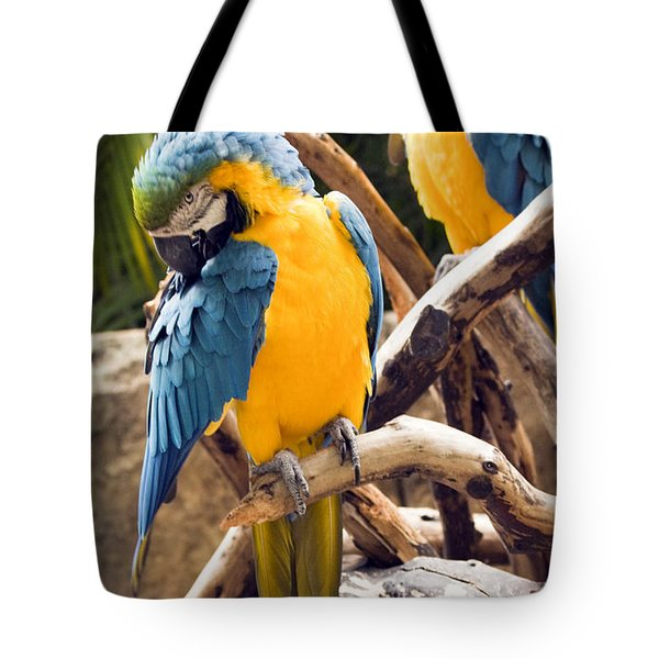 Blue And Yellow Macaw Pair Tote Bag