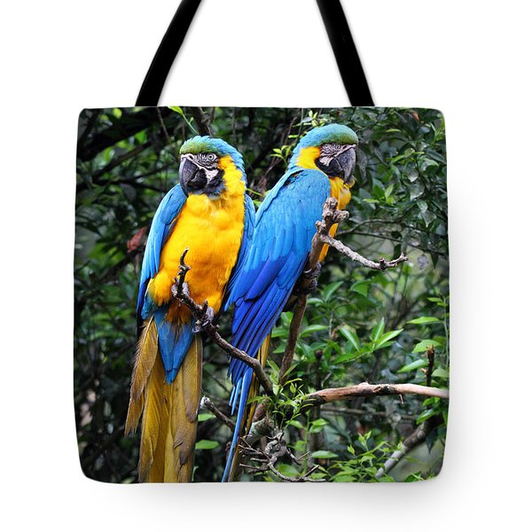 Blue And Yellow Macaws Tote Bag