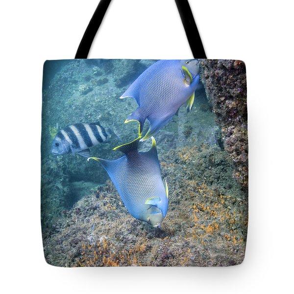 Blue Angelfish Feeding On Coral Tote Bag by Michael Wood