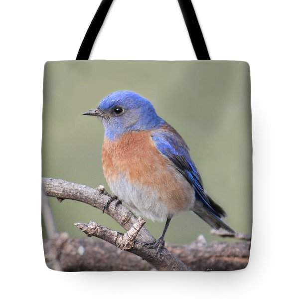 Blue Bird At Sedona Tote Bag by Debbie Hart