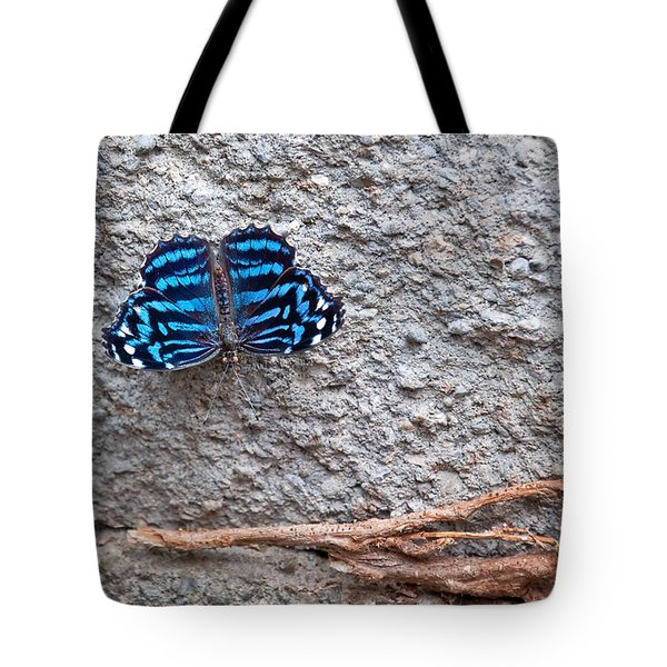 Blue Butterfly Myscelia Ethusa Art Prints Tote Bag