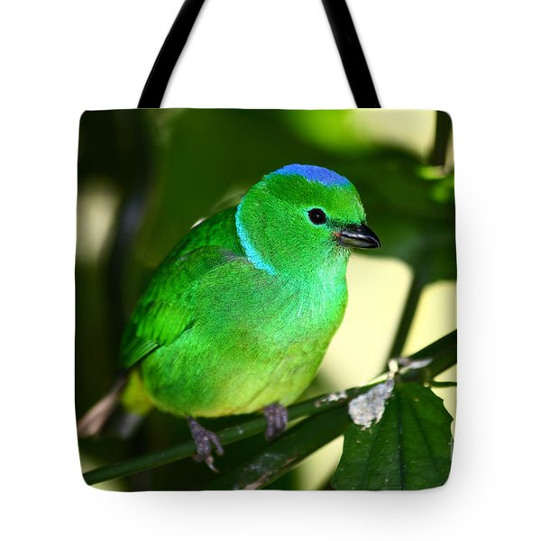 Blue Crowned Chlorophonia Tote Bag by James Brunker