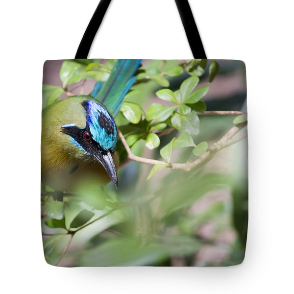 Tote Bag featuring the photograph Blue-crowned Motmot by Rebecca Sherman
