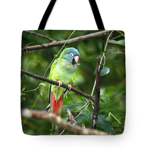 Blue Crowned Parakeet Tote Bag by James Brunker