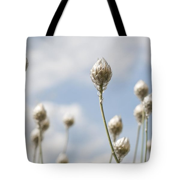 Blue Cupidone Tote Bag by Lana Enderle
