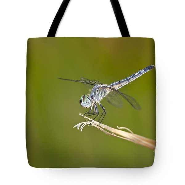 Tote Bag featuring the photograph Blue Dasher On The Edge by Bryan Keil