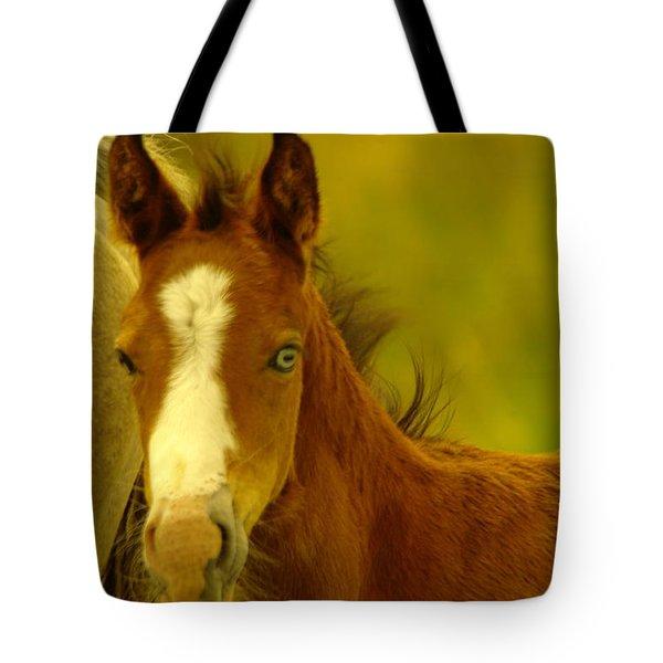 Blue Eyed Colt Tote Bag