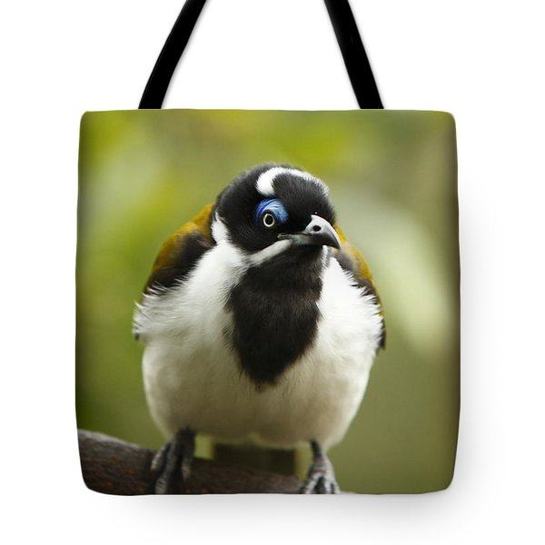 Blue Eyed Honeyeater Tote Bag