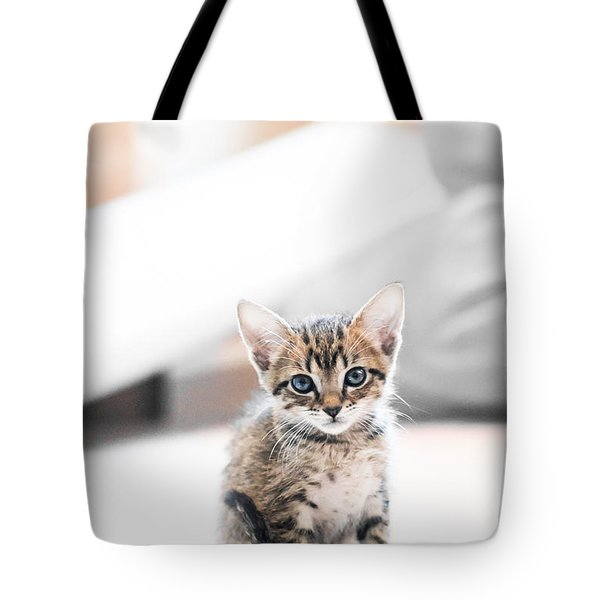 Blue Eyed Kitten Tote Bag by Shelby  Young