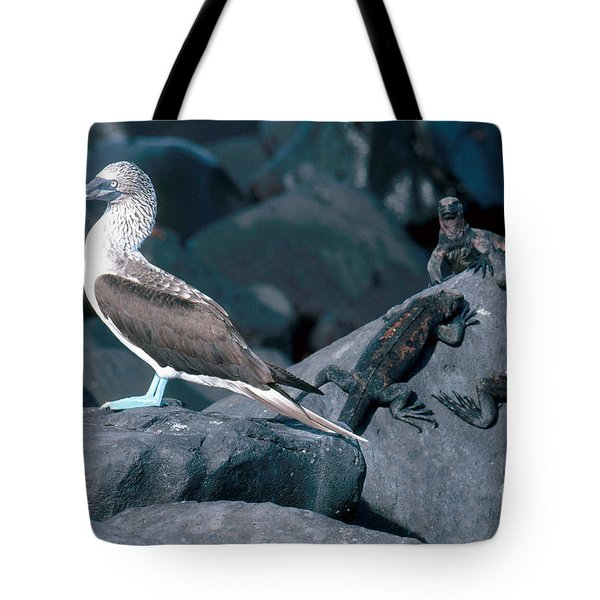 Blue-footed Booby And Iguanas Tote Bag