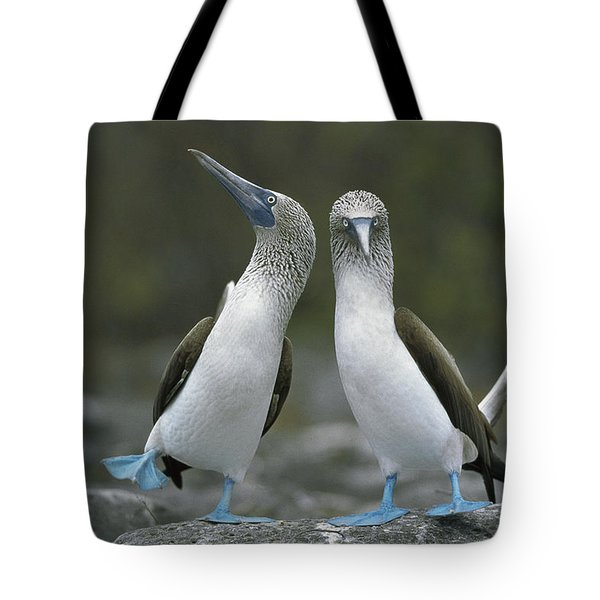 Blue Footed Booby Dancing Tote Bag by Tui De Roy