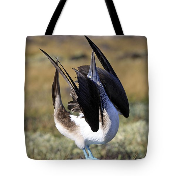 Blue-footed Booby Display Tote Bag