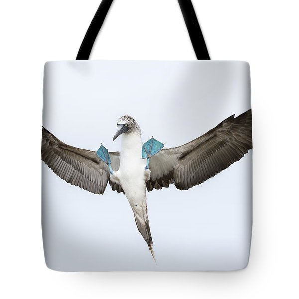Blue-footed Booby Landing Galapagos Tote Bag by Tui De Roy
