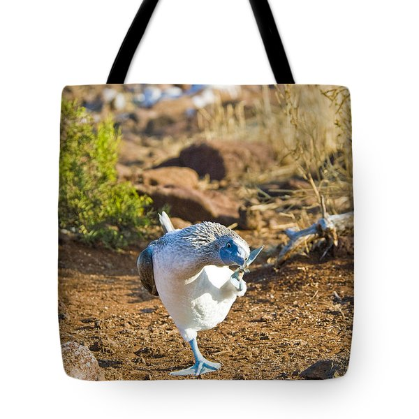 Blue-footed Booby Scratching Head Tote Bag