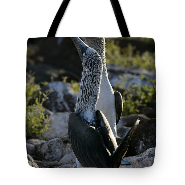 Blue-footed Booby, Sula Nebouxii Tote Bag