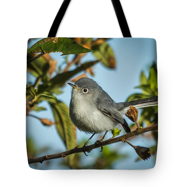 Blue-gray Gnatcatcher Tote Bag by Jane Luxton