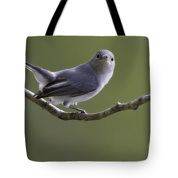 Blue-gray Gnatcatcher Tote Bag by Meg Rousher