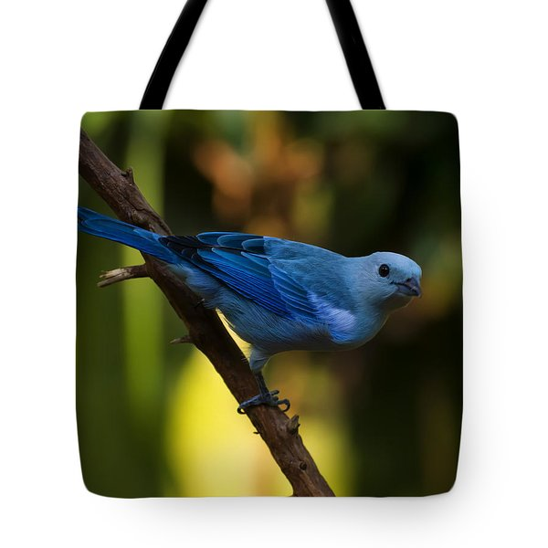 Blue Grey Tanager Tote Bag by Chris Flees