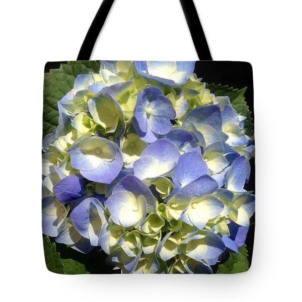 Blue Hydrangea  Tote Bag by Alohi Fujimoto