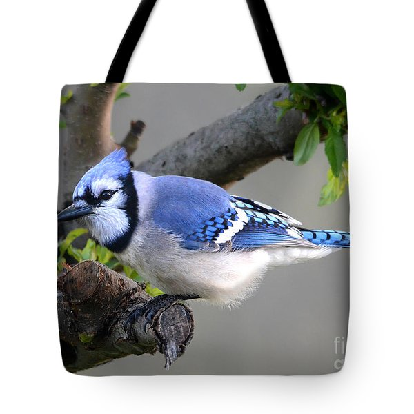 Blue Jay Beauty Tote Bag