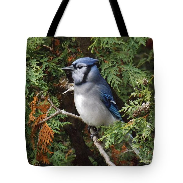 Tote Bag featuring the photograph Blue Jay In Cedar Tree 2 by Brenda Brown