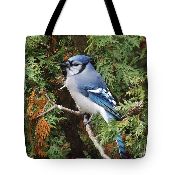 Tote Bag featuring the photograph Blue Jay In Cedar Tree by Brenda Brown
