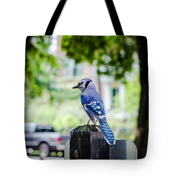Tote Bag featuring the photograph Blue Jay by Sennie Pierson