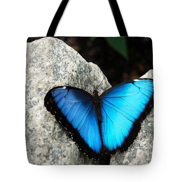 Blue Morpho Butterfly Tote Bag by Eva Kaufman