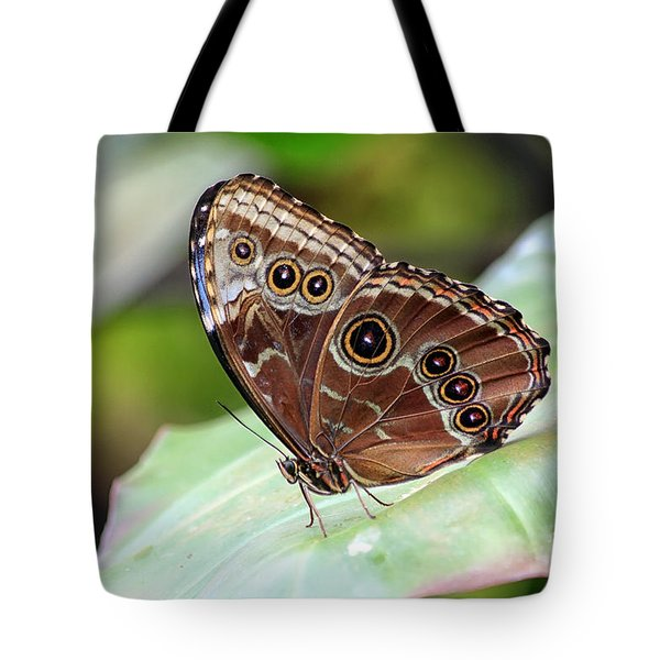 Blue Morpho Butterfly Tote Bag by Teresa Zieba