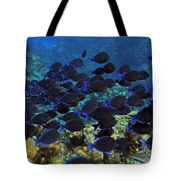 Blue Tangs Tote Bag by Carey Chen