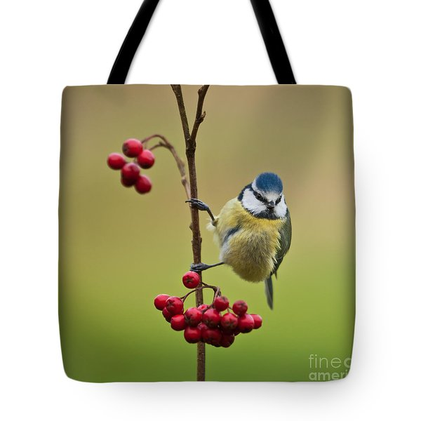 Blue Tit With Hawthorn Berries Tote Bag