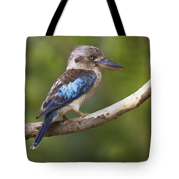 Blue-winged Kookaburra Queensland Tote Bag
