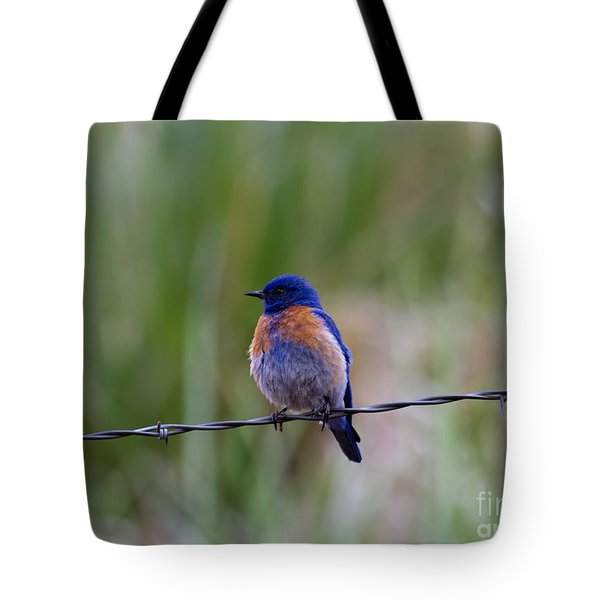 Bluebird On A Wire Tote Bag by Mike  Dawson