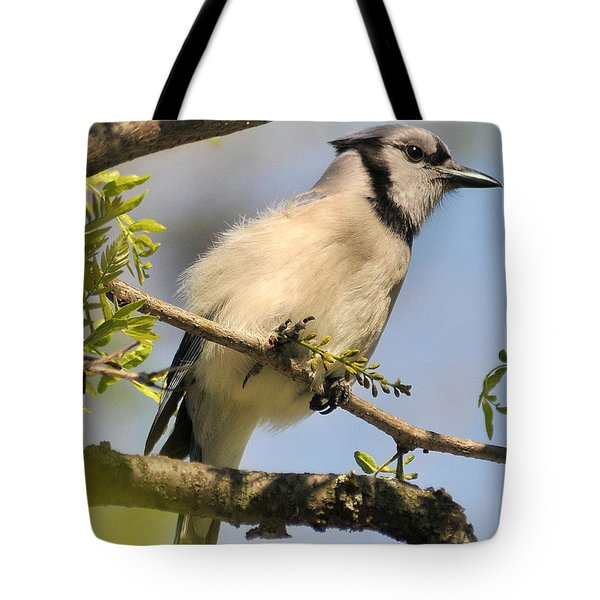 Bluejay 310 Tote Bag