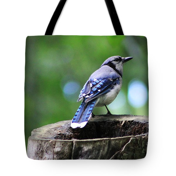Tote Bag featuring the photograph Bluejay by Alyce Taylor