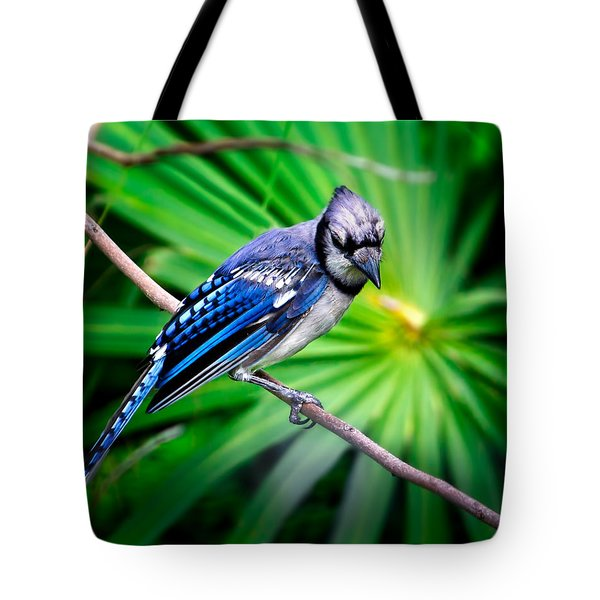 Thoughtful Bluejay Tote Bag