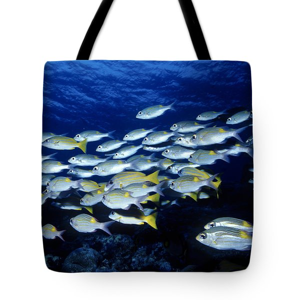 Bluelined Snappers And Yellowspot Emperors Tote Bag