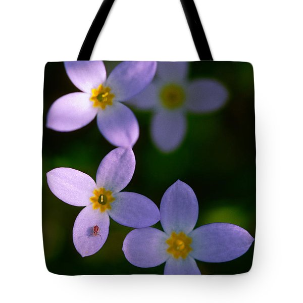 Tote Bag featuring the photograph Bluets With Aphid by Marty Saccone