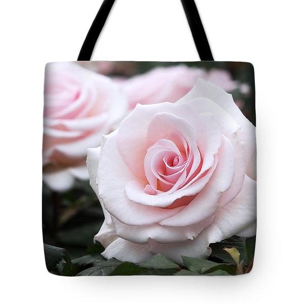Blush Pink Roses Tote Bag
