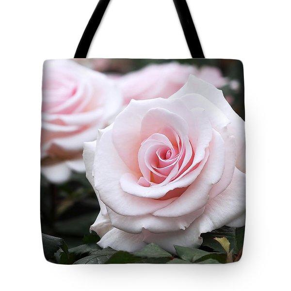 Blush Pink Roses Tote Bag by Rona Black