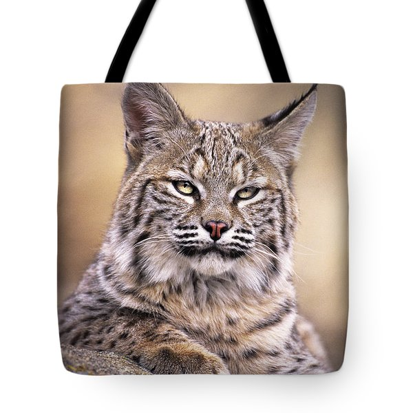 Bobcat Cub Portrait Montana Wildlife Tote Bag by Dave Welling