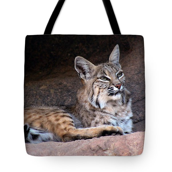 Tote Bag featuring the photograph Hmm What To Do by Elaine Malott