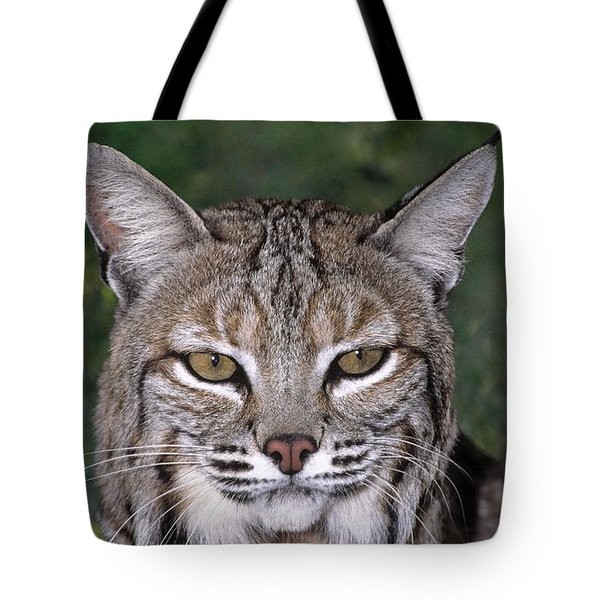 Tote Bag featuring the photograph Bobcat Portrait Wildlife Rescue by Dave Welling