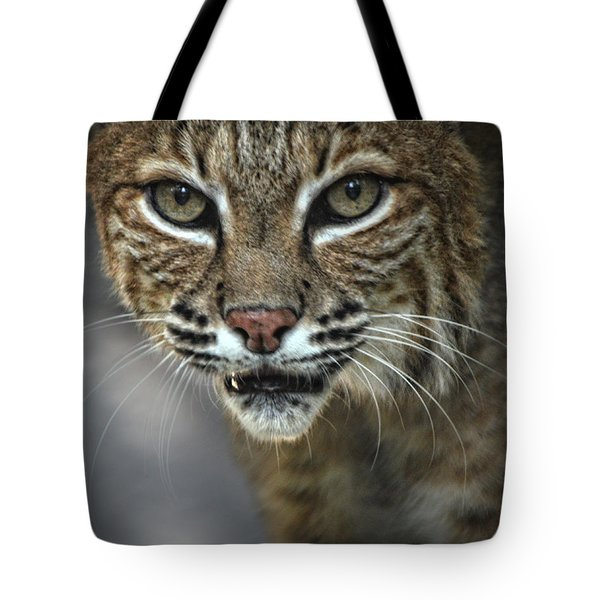 Bobcat Stare Tote Bag